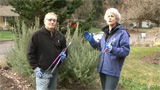 Pruning Woody Perennials